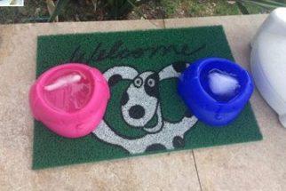 Cliente de sorveteria reclama de água deixada para cães e gera polêmica