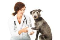 Edema na pata do cão: como devo tratar e quais cuidados devo ter