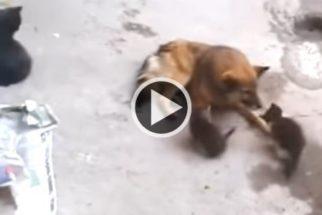 Emocionante: gata leva filhotes para conhecer sua velha amiga
