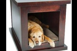 Empresa desenvolve casinha antiansiedade para cães