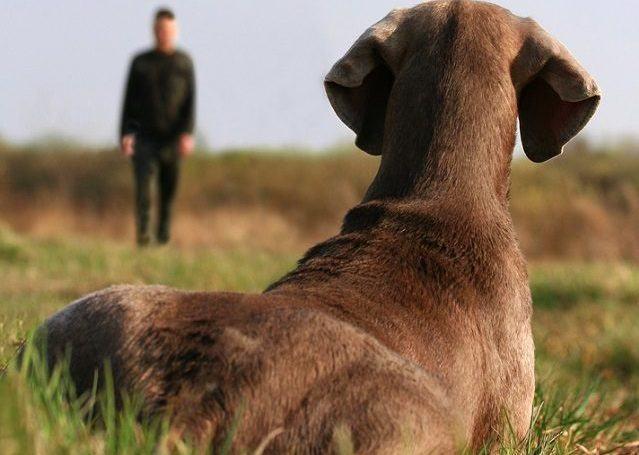 Ensine o seu cão o exercício para rastejar em apenas 3 passos