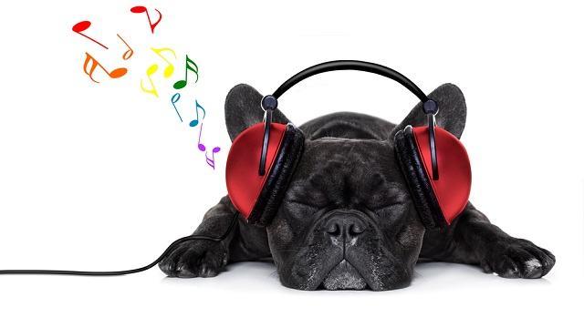 Estudo revela qual o estilo de música favorito dos cães