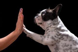 Exercício para o cão cumprimentar devidamente as pessoas
