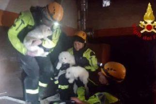 Filhotes são salvos após 5 dias presos em escombros de avalanche