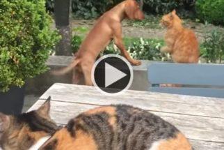 Amizade: gato protege seu amigo cachorro de outro bichano 'malvado'