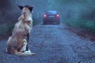 Projeto de ONG busca conscientizar sobre o abandono animal