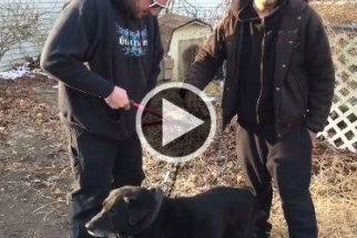 Liberdade: cão é solto após passar 15 anos acorrentado