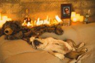Cãozinho posa para foto romântica em homenagem a amigo