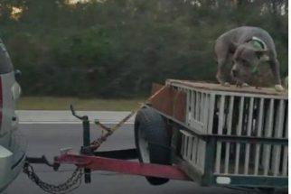 Mulher filma cão preso a carro por apenas uma corrente e denuncia