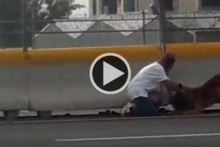 Mulher se arrisca em rodovia para salvar cão atropelado