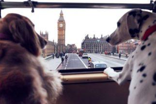 Londres ganha ônibus turístico feito especialmente para cães