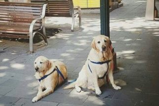 Página no Facebook mostra fotos de cães tristes do lado de fora de lojas