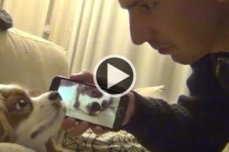 Para rir: tutor se vinga de maneira criativa de cadelinha que ronca