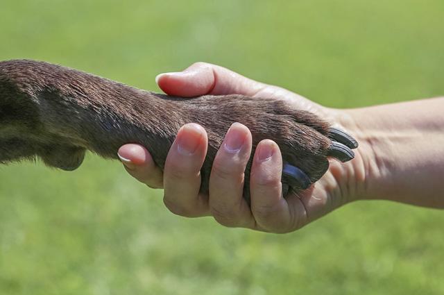 Caso o ferimento do cão seja superficial, é possível que seja tratado em casa
