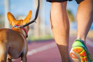 Treinadora ensina exercício para o cachorro passear sem puxar a guia