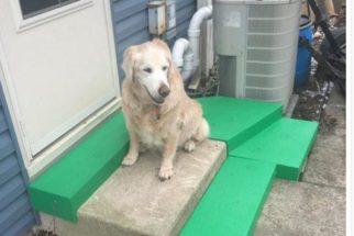 Tutor readapta escadas para que seu cão idoso consiga subir