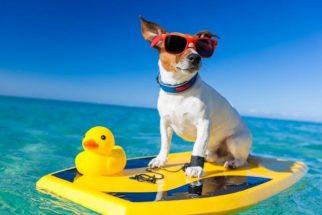 Verão: saiba como cuidar bem do seu pet durante a estação