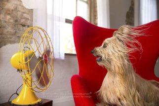 Ensaio fotográfico mostra cães interagindo com ventilador antigo