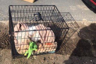 Cão é abandonado junto com todos os seus pertences