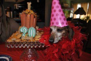 Mulher honra último desejo de mãe dando festa de aniversário para cadela