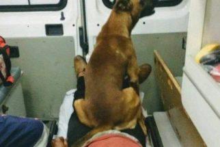 Morador de rua é levado para hospital e seu cão se recusa a abandoná-lo
