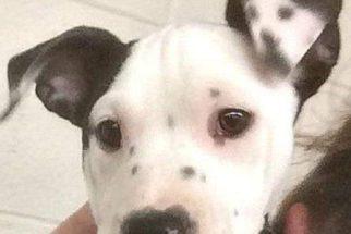 Cadelinha nasceu com mancha na orelha que parece o rosto de cachorro