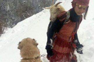 Garota e seu cão resgatam cabra e filhote recém-nascido