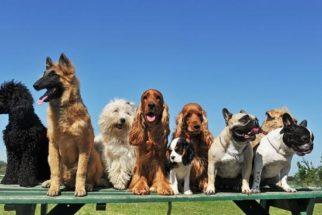 Acredite: Há 150 anos a 'raça' do seu cachorro ainda não existia