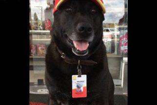Após ser abandonado, cachorro é 'contratado' por posto de gasolina