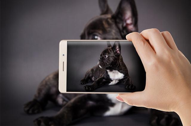 Aprenda como fazer o seu cãozinho bombar no Instagram