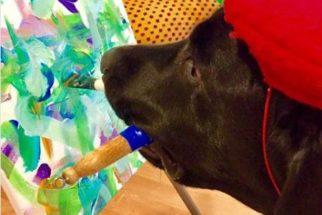 Artista: cão pinta quadros e arrecada dinheiro para caridade