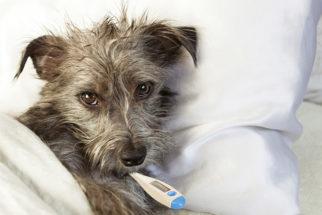Cão intoxicado com monóxido de carbono? Saiba como ajudar