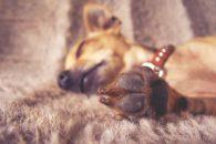 O que é infecção no leito da unha do animal e quais os tratamentos