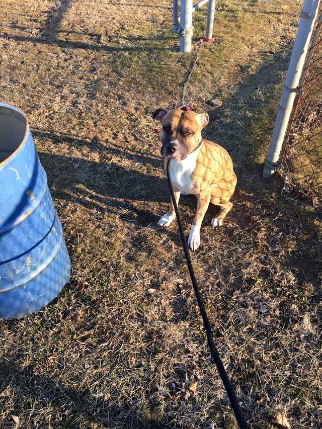 cachorro-e-preso-em-poste-e-abandonado-e-mesmo-apos-soltarse-continua-esperando-tutor