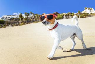 Casos de insolação em cães. O que fazer?