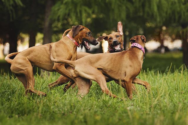 Para tratar ferimentos de mordidas de animais no cão é indicado compressa para conter o sangramento