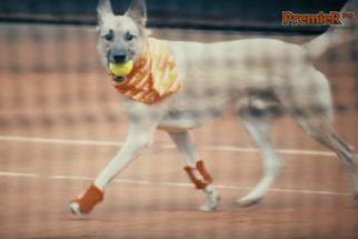 Cadelas que vivem em abrigos serão gandulas em torneio de tênis