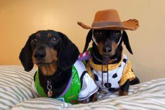 Cãezinhos fantasiados podem inspirar trajes para o seu pet curtir o Carnaval