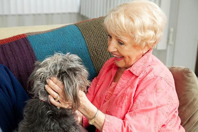 Cães são capazes de entender o que dizemos, independente da entonação