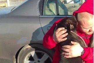 Cão perdido é salvo de 'corredor da morte' e volta para família