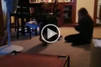 Cão mostra que não leva jeito para levar correspondência