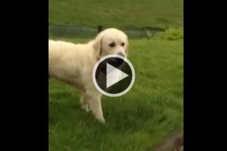 Cãozinho 'rouba' celular de tutor para que ele o dê atenção