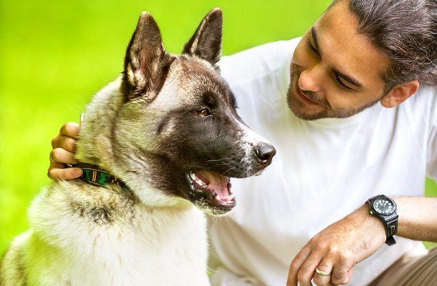 Ciência comprova: seu cão se parece mais com você do que você imagina!