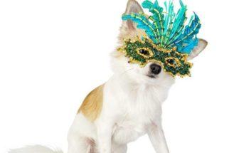 Confira 7 modelos de fantasias de Carnaval para o seu cãozinho