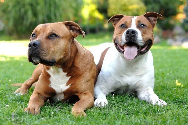 Conheça as raças de cães 'experts' em fugir dos tutores