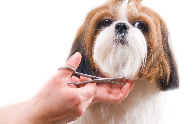 Cuidados que devemos ter com a tosa de cães no verão