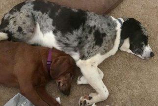 Inseparáveis: cadela se recusa a ser adotada sem o seu melhor amigo