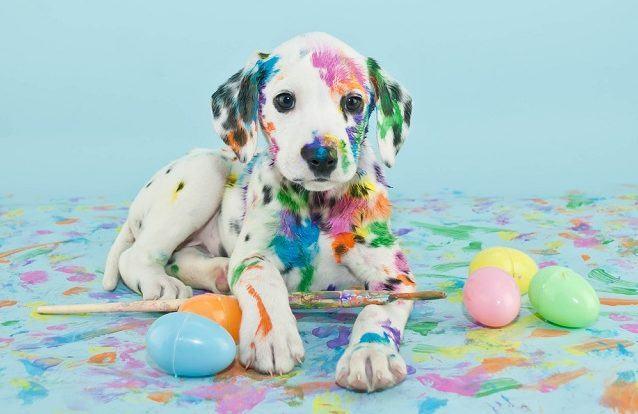 Essas são as mentiras sobre cães que você talvez acreditava quando criança