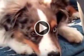 Fofura: cãozinho acorda assim que sua música preferida começa a tocar