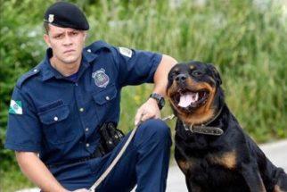 Guarda municipal faz homenagem emocionante para cão policial
